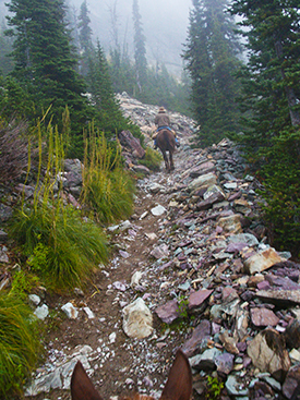 Photo of horse trail in Glacier National Park, Montana, by John Hulsey