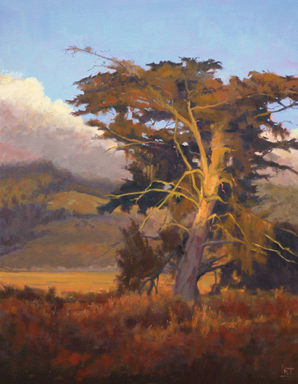 Oid Bolinas Cypress by Richard Lindenberg