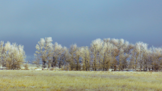 Photograph of frost rimmed trees © A. Trusty