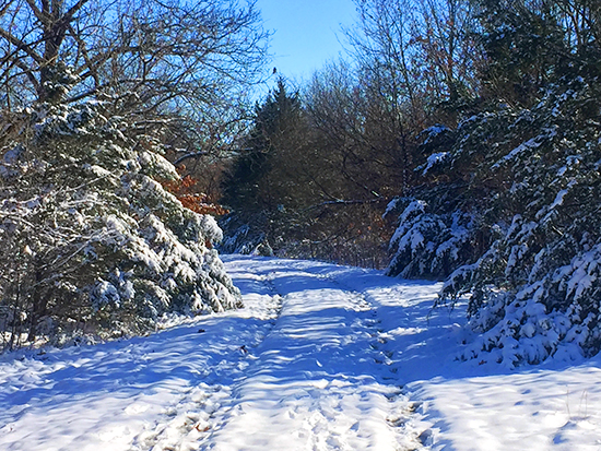 Photograph of the Snowy Landscape Behind the Studio
