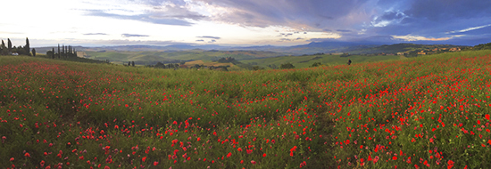 Photograph of Poppy Fields in Tuscany © J. Hulsey