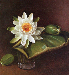 Still Life with Water Lily, 1872, David Johnson (cropped)